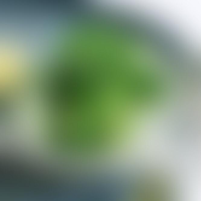 брокколи