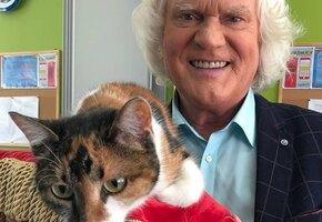 «Это такой бандитизм»: Юрий Куклачев призвал не выбрасывать кошек из-за страха коронавируса