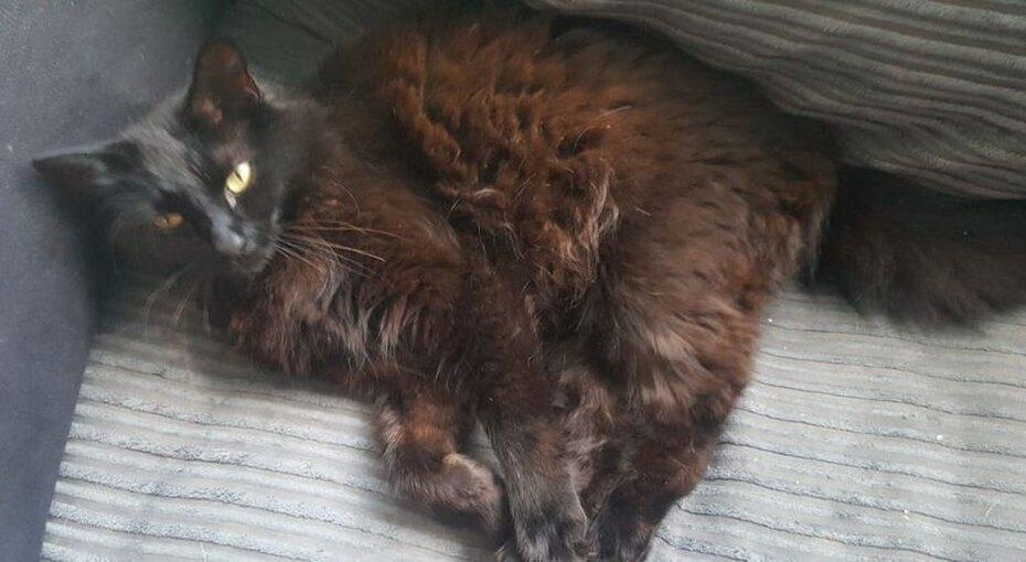 «Погибшая кошка», подаренная напомолвку,  нашлась через15 месяцев после пропажи