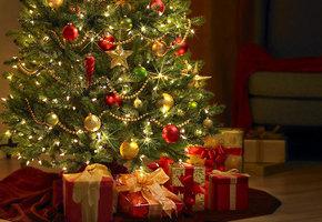 Чтобы елка радовала глаз: 6 лайфхаков как выбрать дерево и сохранить его