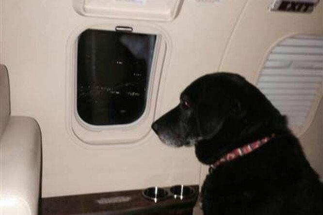 За  старой собакой, откоторой дважды отказались хозяева, прилетел персональный самолет