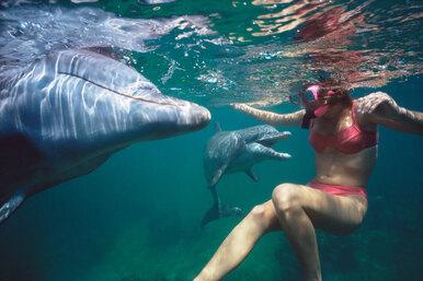 Что делать, если увидели вморе дельфина: плыть кнему или кберегу