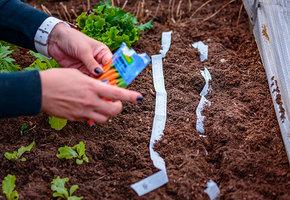 Посевной календарь: 5 причин, почему у вас ничего не растет