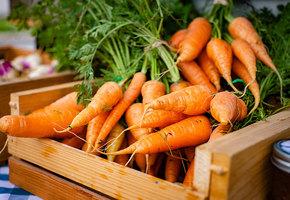 Рецепты с морковкой: запеченная с орешками, глазированная, по-корейски, суп-пюре и запеканка