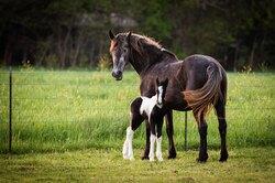 Жеребенка, потерявшего мать, приняла лошадь сразбитым сердцем