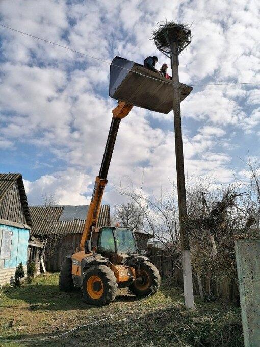 восстановление гнезда аиста