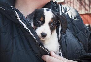Бездомному пришлось отдать любимую собаку в приют. Но настало время вернуть ее