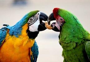 Попугаи научились тратить деньги и поддерживать разорившихся собратьев