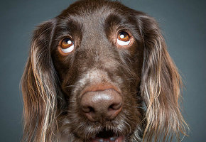 О чем говорят собаки, когда молчат. 11 невероятно выразительных фотографий