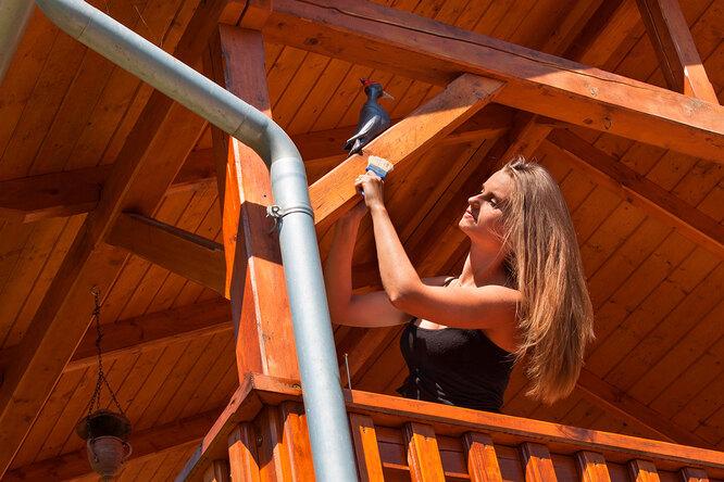 Как покрасить террасу, забор икалитку? 5 профессиональных советов