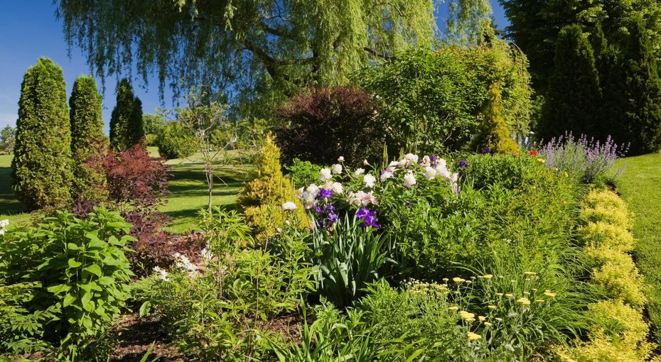 Петунья, лаванда и еще восемь дачных растений, которые отпугивают вредителей