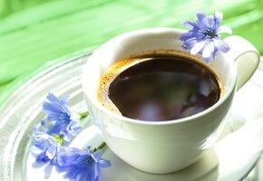 Кофе из цикория: все о его пользе