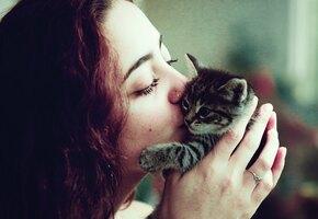 Хозяева целуют кошек и собак ради флешмоба. Реакция кошек смешит до слез