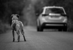 «Спасибо вам!»: приют поблагодарил хозяйку, бросившую собаку на улице