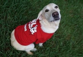 Добрый человек: парень снял футболку, чтобы согреть уличного пса