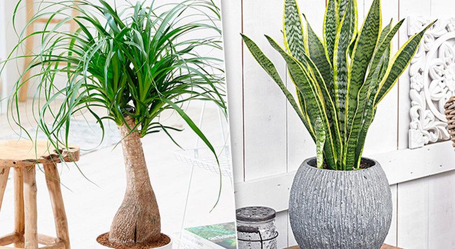 8 растений, которые можно оставить безполива намесяц