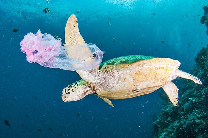 Сокращение видового природного разнообразия