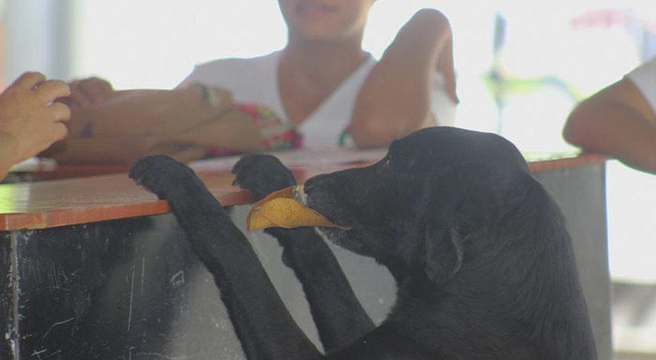 Собака научилась платить засвою еду, наблюдая залюдьми