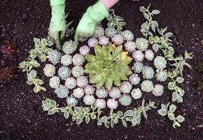 Цветочная клумба: оформляем сад