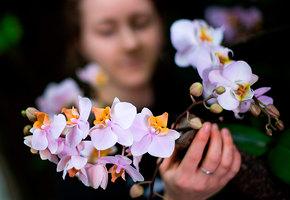 Орхидеи для новичков: простые советы по выращиванию