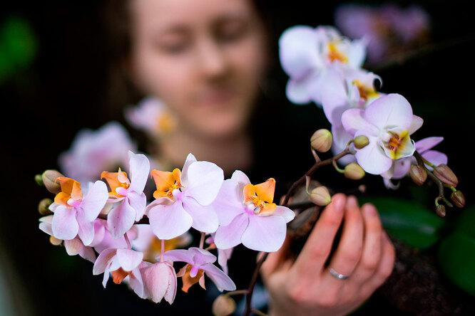 Орхидеи дляновичков: простые советы повыращиванию