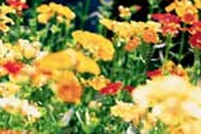 Питомники растений вПодмосковье