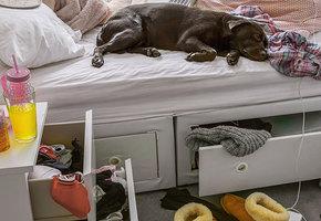 Подросток и его комната. Инструкция для отчаявшихся родителей