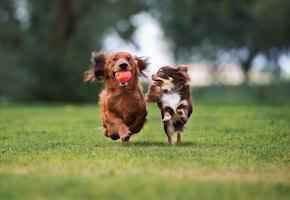 В парке Сокольники пройдет крупнейшая фотосессия маленьких собак