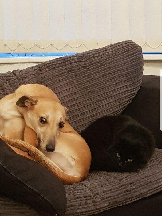 Келли иНелли после возвращения кошки домой