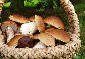 Как приготовить грибную икру? 2 простых рецепта