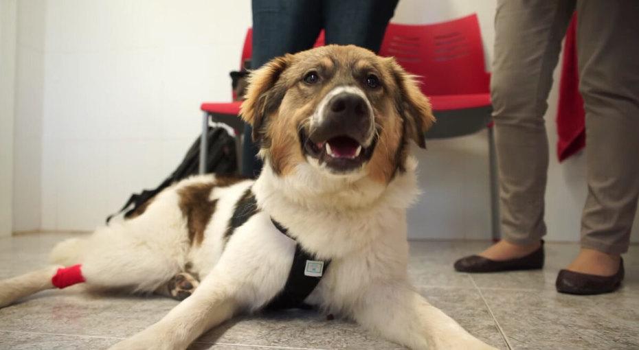 Дети искупали щенка вклее. Его спасли заминуты догибели