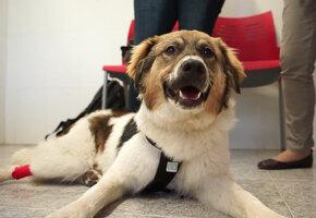 Дети искупали щенка в клее. Его спасли за минуты до гибели