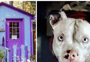 Женщина построила деревню для собак, в которой хочется жить людям
