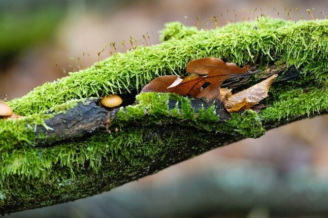 Вреден ли мох и лишайники на деревьях?