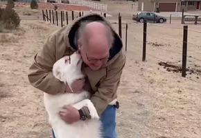 До слез: слепоглухая собака встретилась с хозяином после 1,5 лет разлуки