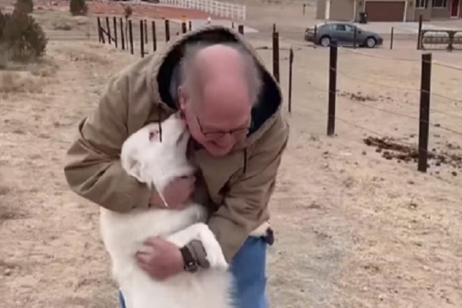 До слез: слепоглухая собака встретилась схозяином после 1,5 лет разлуки