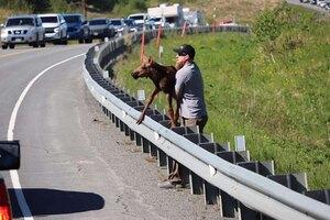 спасение лосенка на шоссе