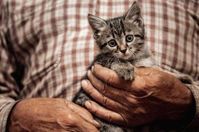«Подарили вторую жизнь»: 100-летний мужчина расплакался привиде котёнка