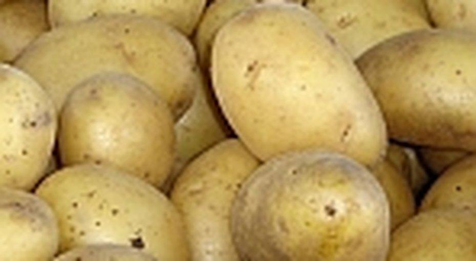 Бытпросвет: лечебный картофель