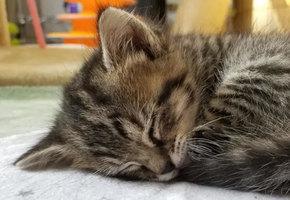Мамино чудо: пятый котенок родился через 4 дня после погибших братьев и сестер