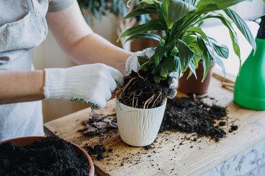 Не только скорлупа: 7 отходов скухни, которыми можно подкармливать растения