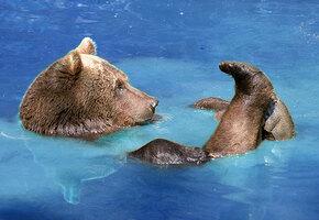 Наглость — второе счастье: медведь залез к людям и принял горячую ванну (видео)