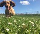 Чудо природы: щенок ссамыми длинными ресничками покорил взглядом миллионы людей