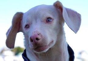 Женщина взяла домой слепоглухого щенка. Он стал кумиром для школьников США