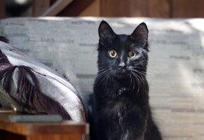 Женщина не могла смириться со смертью кота — и решила его клонировать