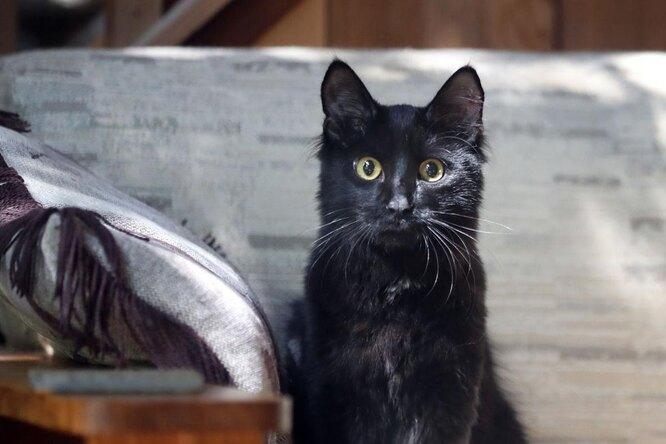 Женщина немогла смириться со смертью кота — ирешила его клонировать