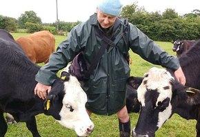 Фермер-вегетарианец не знал, что делать с коровами, но нашел выход