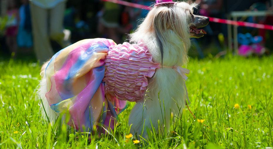 Dog-кутюр: мода длясобак