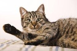 Кот сломал наушники ирешил принести кое-что шокирующее взамен