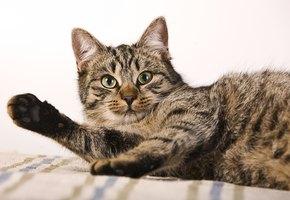 Кот сломал наушники и решил искупить вину необычным способом